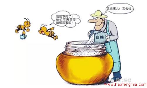 岳西出现售卖假蜂蜜团伙