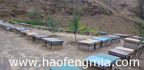 榆阳区农民蜂蜜创业效益好