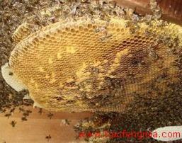 蜂蜜可以治疗鼻炎吗