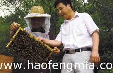 密云花彤蜂蜜