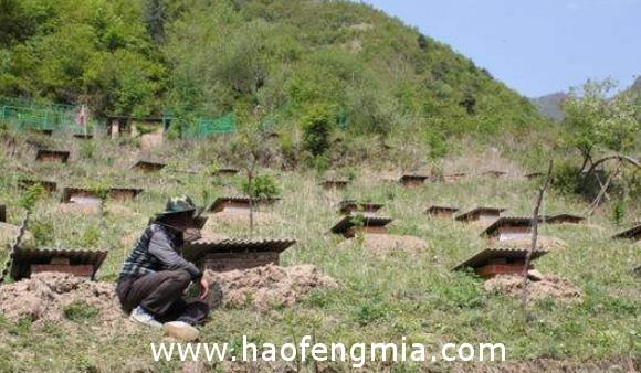 遂川大坑乡:养蜂产业的大丰收