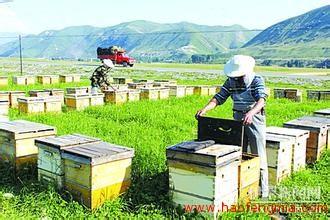 中国蜂产业