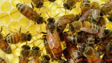 蜂王如何诱入?诱入蜂王的方法介绍