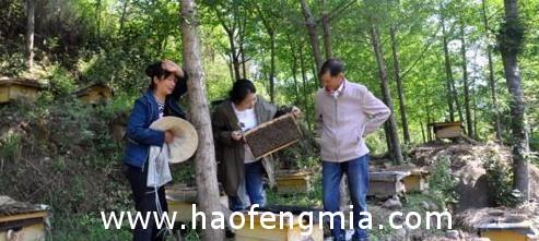 为照顾家人 返乡创业养蜜蜂