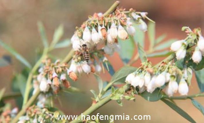 陕北蜜源植物的特点
