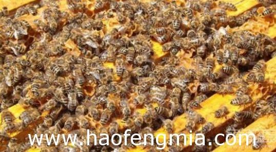 蜂群互补方法介绍