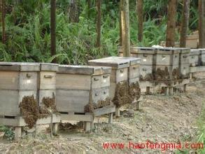 花甲老人蜂蜜创业:养蜂采蜜 年收入十万元