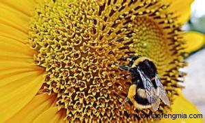 我国蜂蜜产品标准体系建设