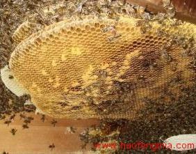 主要养蜂国家养蜂管理与科研机构设置情况简介
