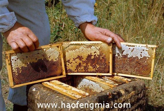 2018年2月份5批次进口蜂蜜未准入境