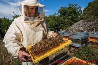 俄罗斯蜂蜜