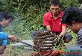 云南养蜂业之民族蜜蜂文化介绍