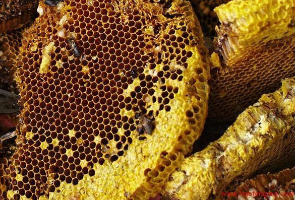 云南南华县发布食用野生蜂蜜中毒预警