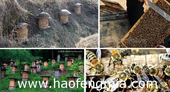 发展蜜蜂养殖特色产业  走出脱贫好路子
