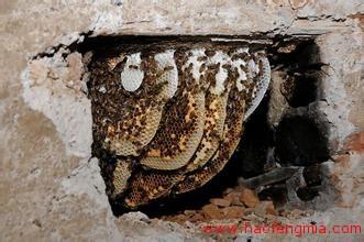 互联网销售蜂蜜  十堰农家土蜂蜜销往北上广