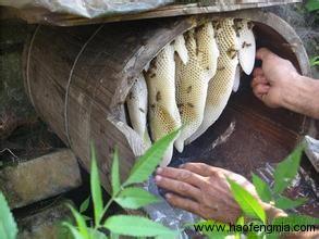 人工蜂粮制备方法介绍