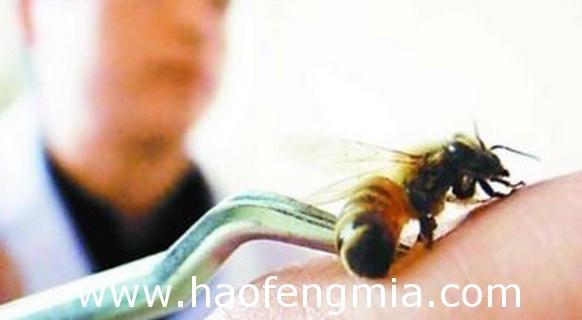 蜂毒疗法的四种方式介绍