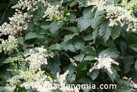 云南主要蜜源植物:三级主要蜜源植物介绍