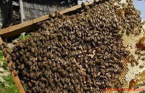 日本玉川大学蜜蜂科学研究所
