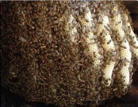 秋末冬初蜂群如何管理?