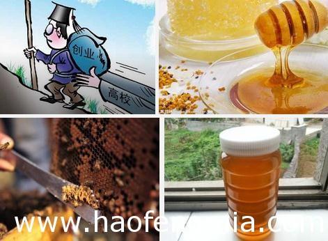 <a href=http://www.360fmw.com target=_blank class=infotextkey>蜂蜜</a>创业