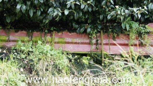 台湾养蜂业之主要蜜粉源植物介绍