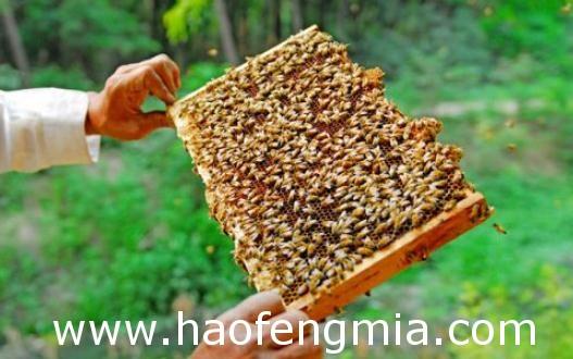如何给蜜蜂喂水