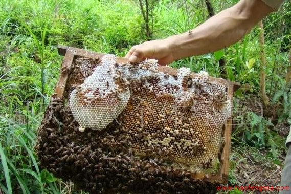 吉林养蜂业之吉林养蜂生产介绍