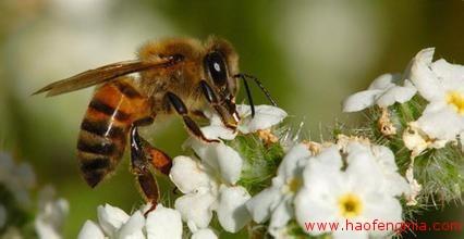 蜂蜜行业预警