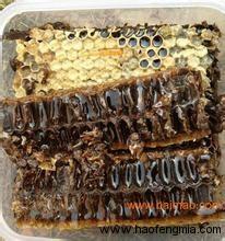 肿瘤病人吃蜂胶有效果吗?癌症病人可以吃蜂胶吗?