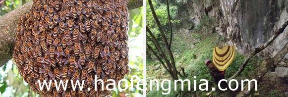 蜂蜜创业:高残青年轮椅上卖野生蜂蜜