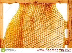 新宾养蜂业:小蜂蜜产出大财富