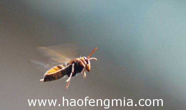 工蜂是怎样工作与生活的