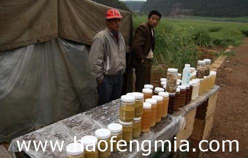 卖蜂蜜创业:熊剑养蜂冷门专业创业 销售过千万