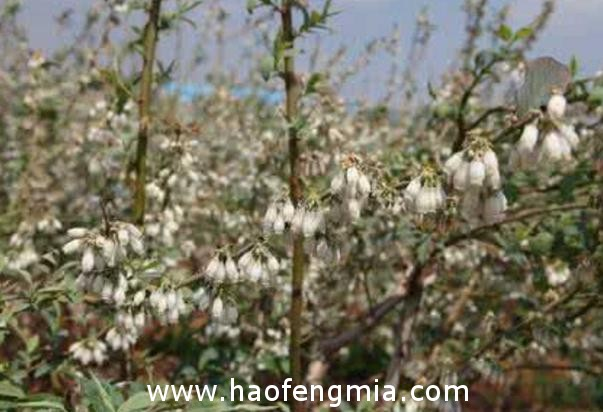 陇南市西和县蜜源植物种类  养蜂效益好