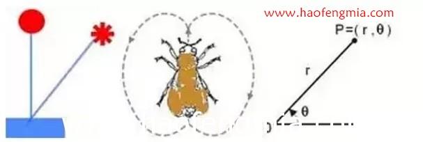 蜜蜂是如何传递信息的?