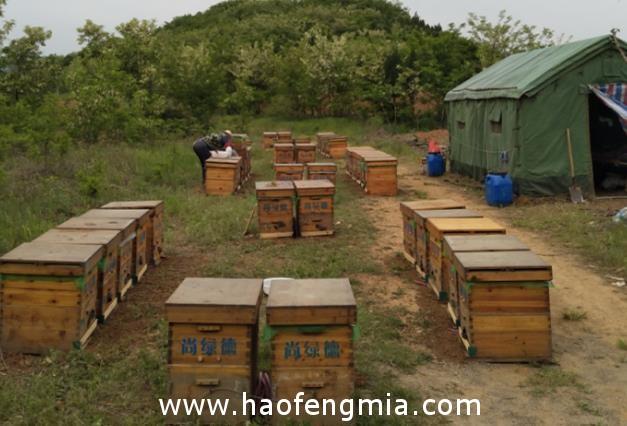 纯正蜂蜜应该多少钱一斤