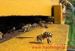 蜂群崩溃综合症