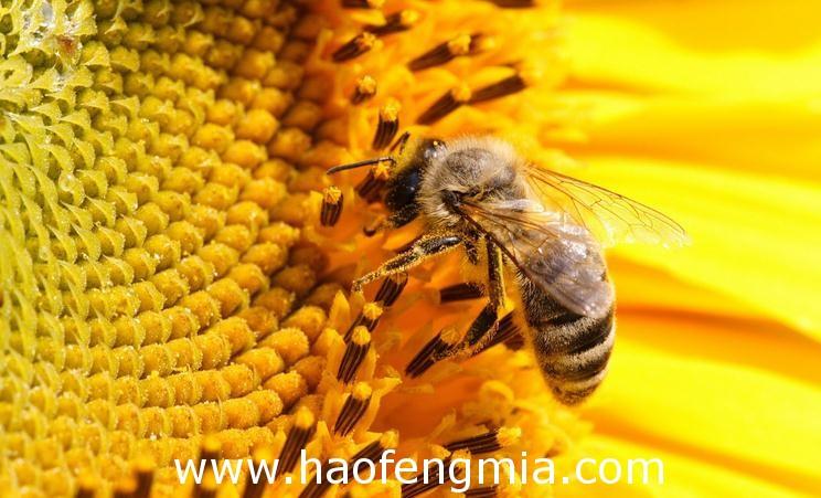 蜜蜂减少是一场灾难