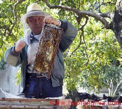 蜂蜜创业养蜂人:追花逐蜜  年产蜂蜜近3吨