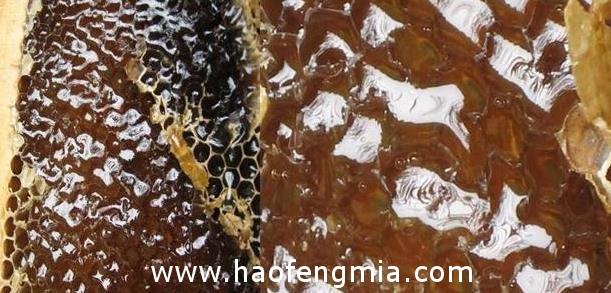 土蜂蜜并非绝对安全 食用需谨慎