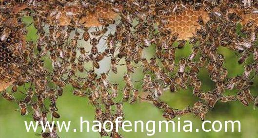 转地养蜂需要注意那些东西?