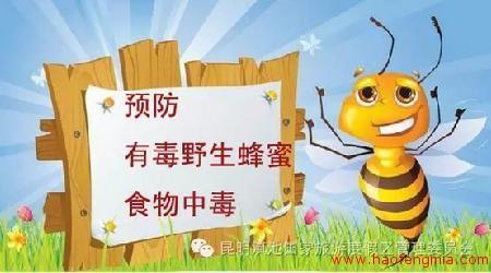 野生蜂蜜中毒