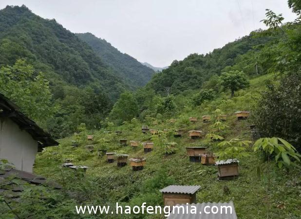 种植蜜源植物定地养蜂有哪些好处?