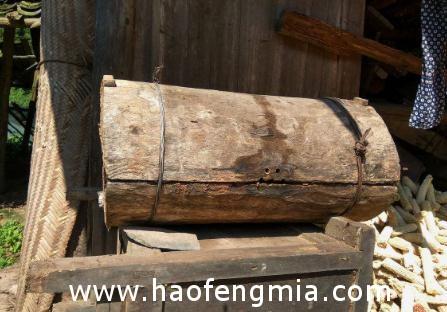香格里拉-白马雪山深处的原始蜂桶蜜