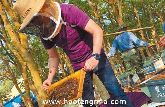 台湾土库蜂蜜价格回稳