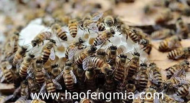 蜜蜂春季繁殖新技术介绍