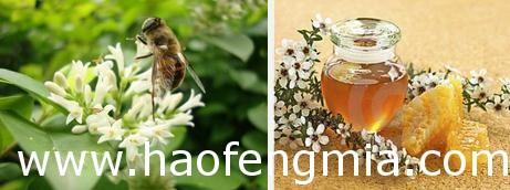 贫困蜂农5万公斤蜂蜜销售难