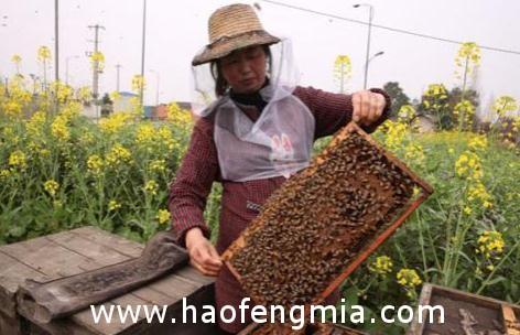 安徽出入境检验检疫局副局长包黎明调研合肥地区出口蜂蜜企业和养蜂基地