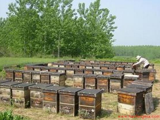 蜂蜜食品生产许可获证企业(SC)之闽侯县青口平堂养蜂场